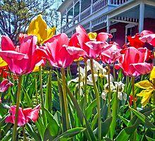 Tulips by Susan S. Kline