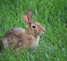 Backyard Bunny by Keeawe