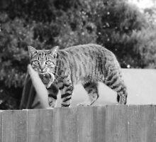Cat on the Fence by RoryMackenzie