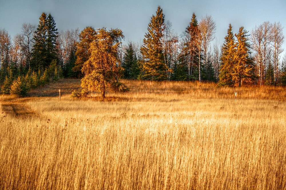 Autumn Fields XIV by Ashlee White