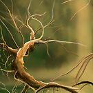 Tree by Isaia