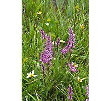 Beautiful Purple Wildflowers Photographic Print