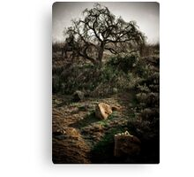 Angry Tree Canvas Print