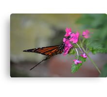 Beautiful Fluttering Butterfly2 Canvas Print