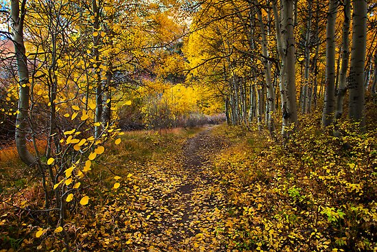 Golden Trail by Thomas Dawson