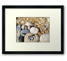 Petrified Driftwood Art Prints Beach Agates Rocks Framed Print