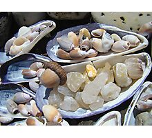 AGATES Rocks Art Prints Sea Shells Coastal Photographic Print