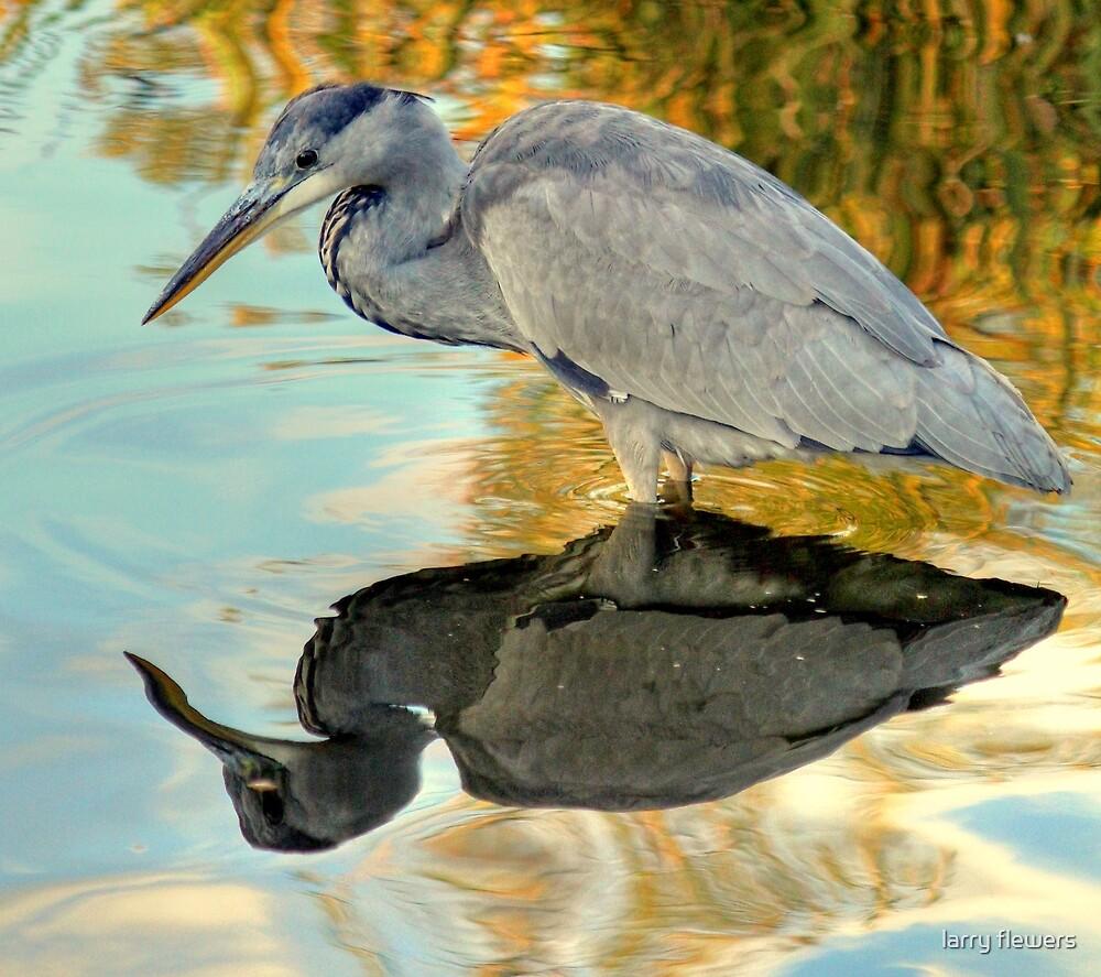 Grey heron by larry flewers