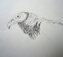 """Vulture sketch"" by Richard Robinson"