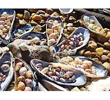 Sea Shells Art Prints Coastal Beach Seashell Photographic Print