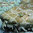 Wobbegong Shark by 2HivelysArt