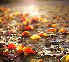 fallen leaves  by Jennifer Kutzleb