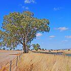 Australian Countryside by Graeme  Hyde