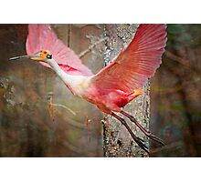 Flight of the Roseate Spoonbill Photographic Print