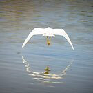 Snowy Egret ~ Farewell Flight by Kimberly Chadwick