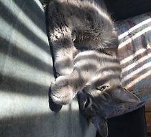 Sleepy Lucy by Guy Ricketts