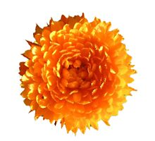 Orange Calendula Flower by wholeblossoms