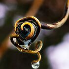 Curly Q and Droplet by Robert Zunikoff