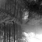 Smooth Woodland  by SuperStrider