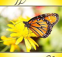 Happy Birthday Monarch Butterfly Card by daphsam