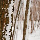 Tree Trunks in Snow by jojobob
