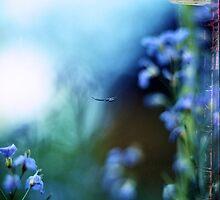 Fairies and Fairytales by Alex Iacob