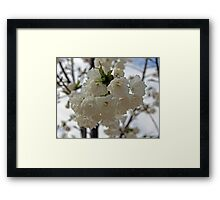 """Seattle Cherry Blossoms"" by Carter L. Shepard Framed Print"