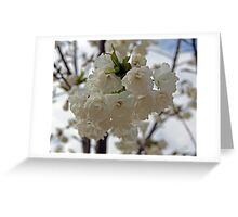 """Seattle Cherry Blossoms"" by Carter L. Shepard Greeting Card"