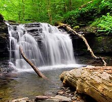 Wyandot Falls and Fallen Timber by Gene Walls