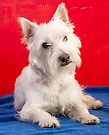 Red, White and Blue Westie by Edward Fielding