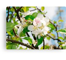 Spring Apple Blossom Canvas Print