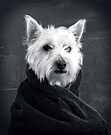 Portrait of a Westie Dog by Edward Fielding