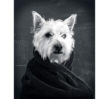 Portrait of a Westie Dog Photographic Print