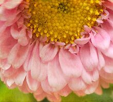 Pink and Pretty by Melinda Anderson