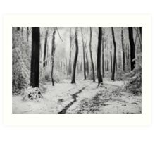 Winter Woodlands Art Print