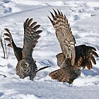 My wings are bigger than yours by Heather King