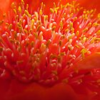 Blood Lily by Blackpig