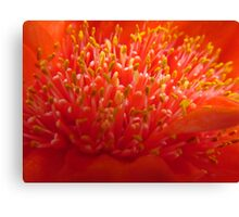 Blood Lily Canvas Print