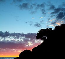 Lone tree by collpics