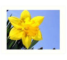 Wild Daffodil* Art Print