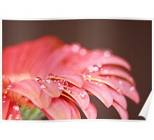 WET RED DAISY 6 Poster