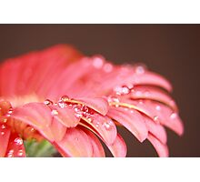 WET RED DAISY 6 Photographic Print