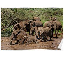 Bath Time! Lake Manyara National Park, Tanzania Poster