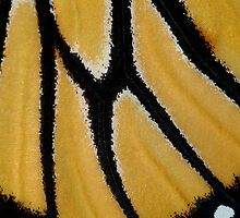 Butterfly Wing by Bill Morgenstern