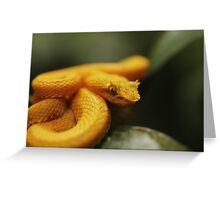 Eyelash Pit Viper, Bothriechis schlegelii Greeting Card
