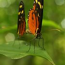 Butterfly Love by Seth LaGrange