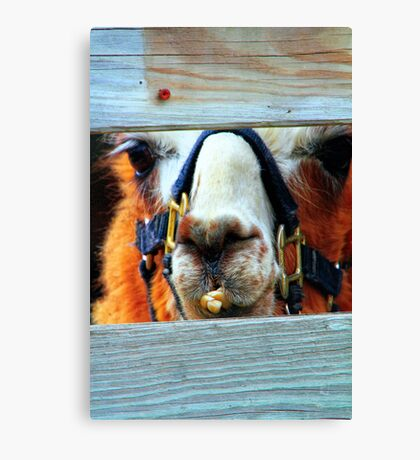 Guess the Animal Canvas Print