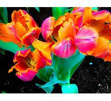 Vibrant Neon Tulips in Bloom Photographic Print