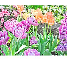 Bright and Pretty Tulips Photographic Print