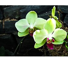 Green Orchids Delicately Bloom Photographic Print